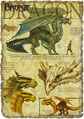 Bronze dragon anatomy - Richard Sardinha.jpg