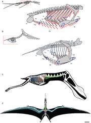 Pterosaur pulmonary air sac system
