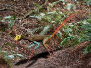 Epidexipteryx BW