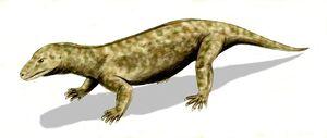 Procynosuchus BW