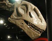 Omeisaurus tianfuensis2