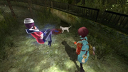 Seto Sai Follow Cat