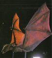 Fright Night 1985 Vampire Bat Marionette.jpg