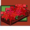 Red Poinsettas-icon