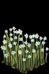 Flax green