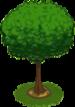 Oak Sapling-icon