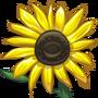 Sunflowers-icon