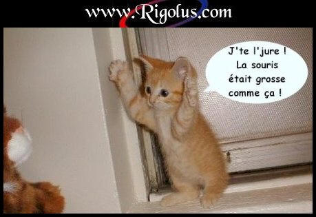 Fichier:Chat-drole-2.jpg