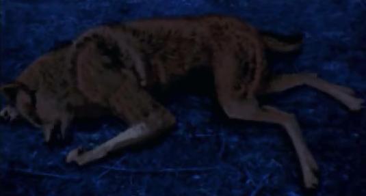File:Von Zell dead in wolf form.jpg
