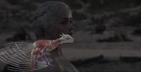 Making of Dragons