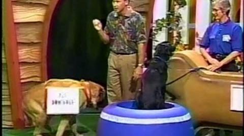 That's My Dog Copper vs. Millie