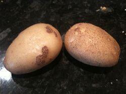 Potato Powdery Scab Common Scab