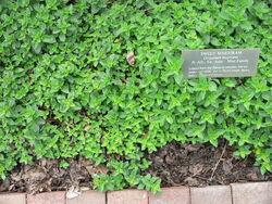 Marjoram Longwood gardens