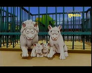 The White Lion Family