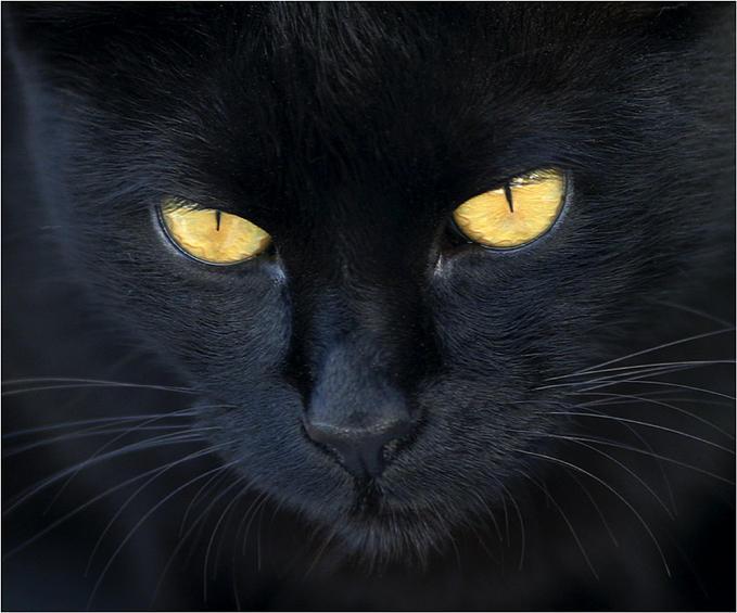 El gato negro wiki gatopedia fandom powered by wikia - El gato negro decoracion ...