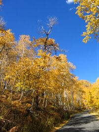 October 12 2005 Alpine Loop Utah United States