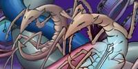 Slaver wasps