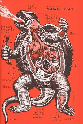 File:Gamera Anatomy.jpg