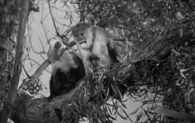 File:Tony the monkey.PNG