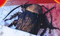 NebulaM Hunters-Roach