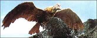 The Giant Condor