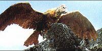 Giant Condor