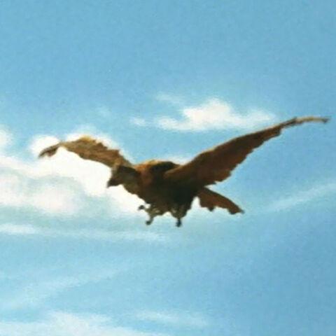 File:Godzilla.jp - 7 - ShodaiOokondoru Giant Condor 1966.jpg