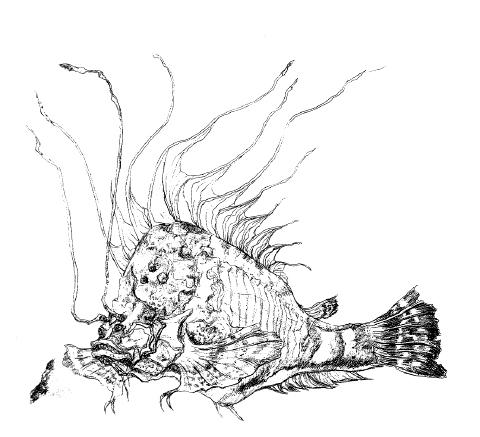File:Concept Art - Yamato Takeru - Kaishin Muba 2.png