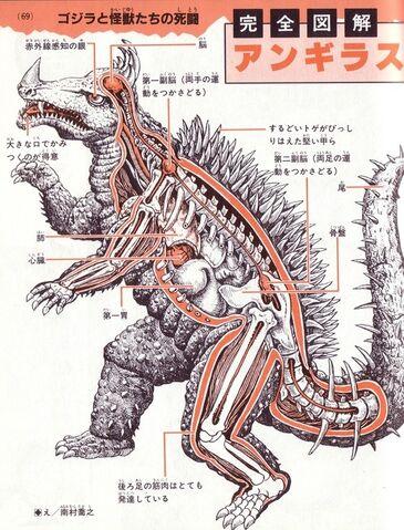 File:A furious skeletonimage.jpeg