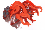 Tals actinia