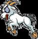 Cursed Goat
