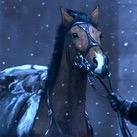 Benjen's Bay Horse