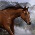 Northern Horse