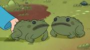 Short7 toads