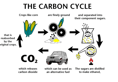 File:Carboncycle.png