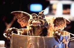 Gremlins 2 die rueckkehr der kleinen monster bild 1