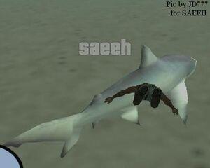 Sharkpic39dy