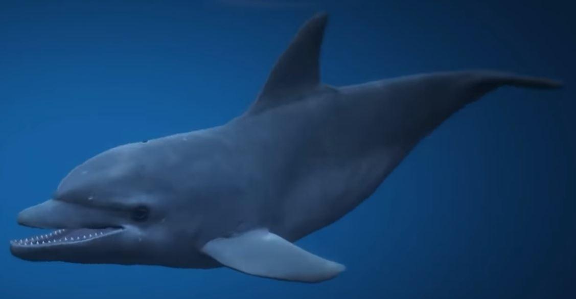 File:Dolphin-GTAV.jpg