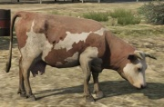 File:Cow-GTAV-brown&white.jpg