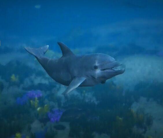 File:Dolphin-GTAV-PS4.jpg