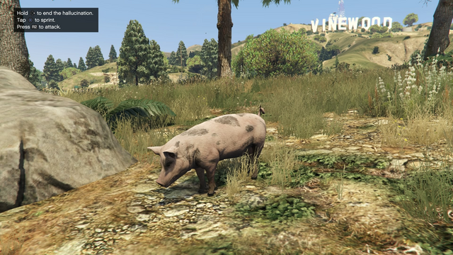 File:Peyote Plants Animals GTAVe Pig.png
