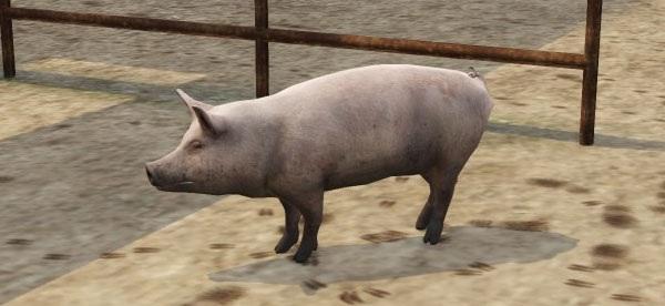 File:Pig3.jpg