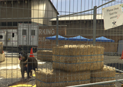 Director Mode Actors GTAVpc Animals Rottweiler
