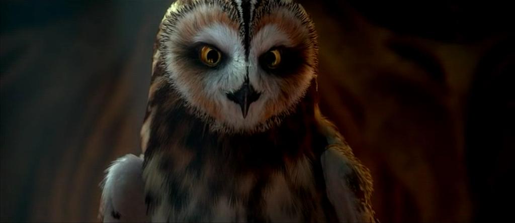 erotik chat community hobbyhure owl