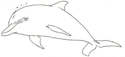 File:Dolphin white1.jpg