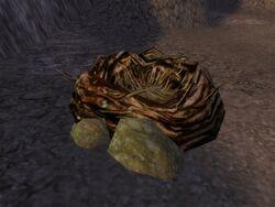 Moa Nest