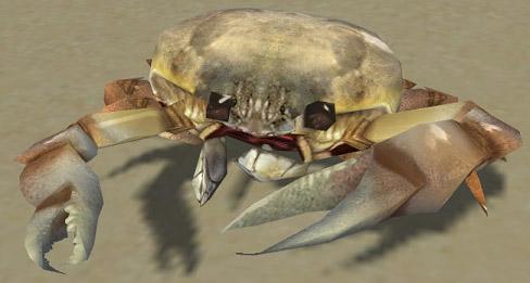 File:White Crab.jpg