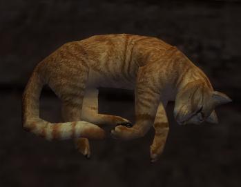 File:Cat xaquang skyway.JPG