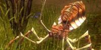 Giant Tree Spider
