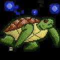 Quest turtle